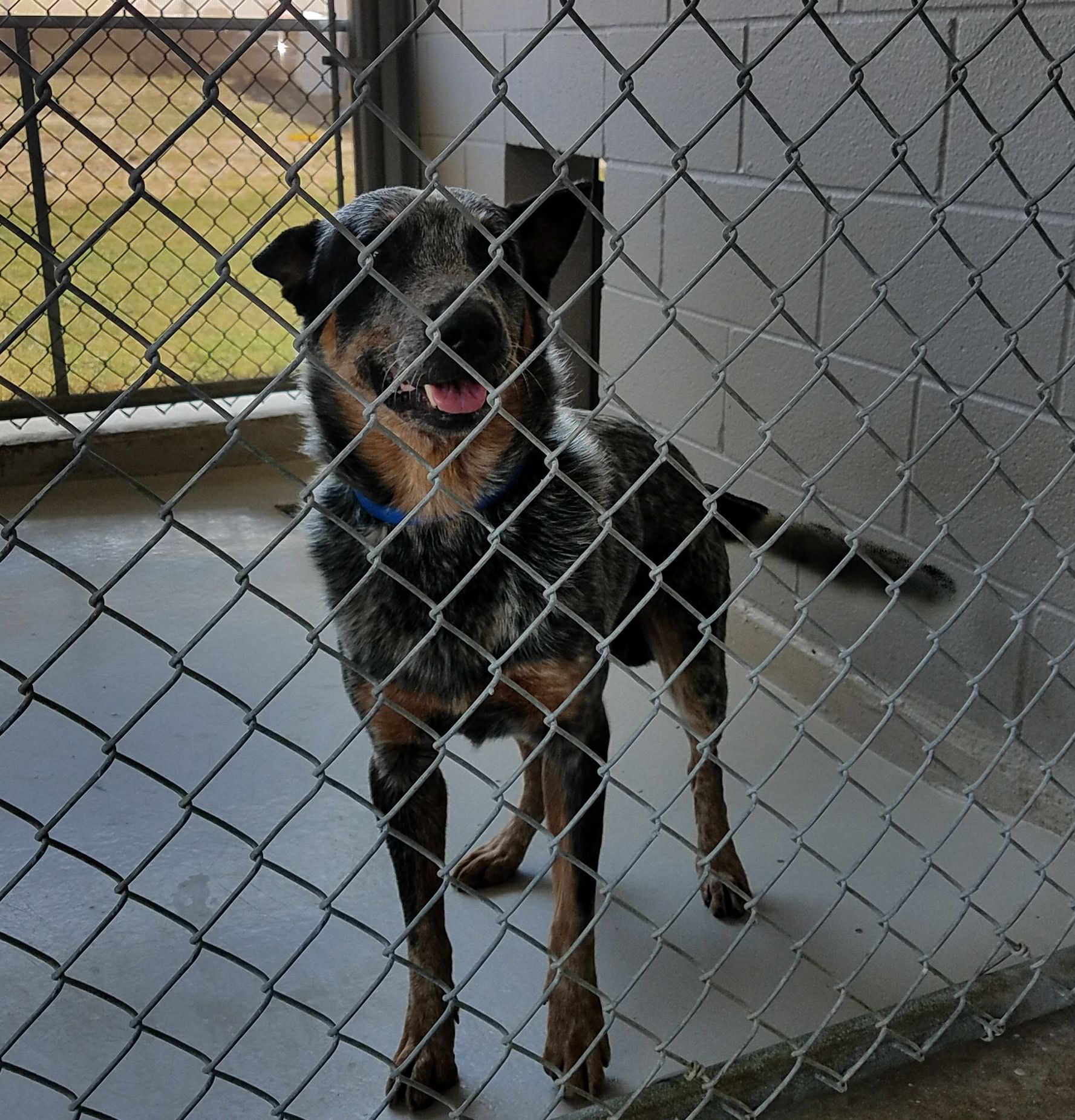 Laredo Dog Adoption