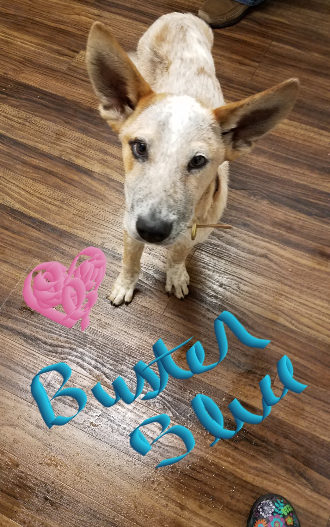 Buster Blue